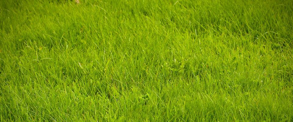 Gräsklipparen behövs på detta gräset